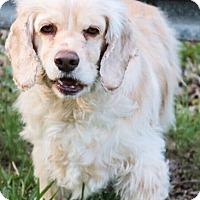 Adopt A Pet :: Bianca - Sugarland, TX