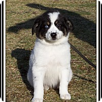 Adopt A Pet :: Wiggles - Milford, NJ
