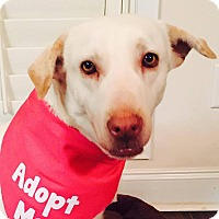 Adopt A Pet :: June - CUMMING, GA