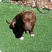 Adopt A Pet :: Mama Lucy - Denver, CO