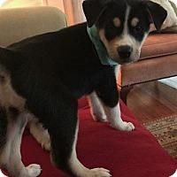 Adopt A Pet :: Prew - Houston, TX