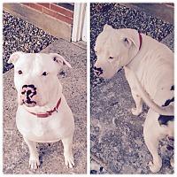 Adopt A Pet :: Rocky - South Windsor, CT