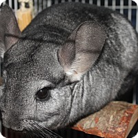 Adopt A Pet :: Brandy - Titusville, FL
