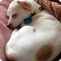 Adopt A Pet :: Patrón - AUSTIN, TX