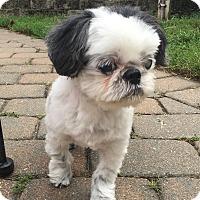 Adopt A Pet :: Jack - Rye Brook, NY