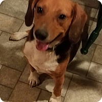 Adopt A Pet :: Franklin - Richmond, VA