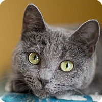 Adopt A Pet :: Mercy - Chicago, IL