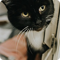 Adopt A Pet :: Honalulu - Indianapolis, IN
