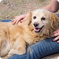 Adopt A Pet :: Rover - Bisbee, AZ