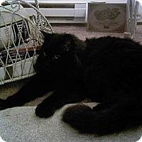 Adopt A Pet :: NALA - Tacoma, WA