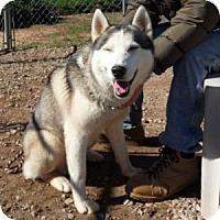 Adopt A Pet :: Yukon - Athens, GA