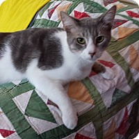 Adopt A Pet :: Kelly - Indianapolis, IN