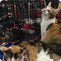 Adopt A Pet :: Purr Fection - Harrisburg, NC
