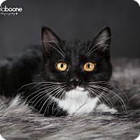 Adopt A Pet :: Miranda - Eagan, MN