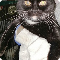 Adopt A Pet :: Choo Choo - Pasadena, CA