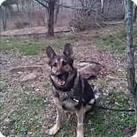 Adopt A Pet :: Sabrina - Louisville, KY