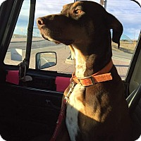 Adopt A Pet :: Toby - Buffalo, WY