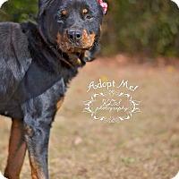 Adopt A Pet :: Precious - Fort Valley, GA