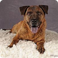 Adopt A Pet :: Navajo - Las Vegas, NV