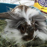 Adopt A Pet :: CYAN - San Clemente, CA