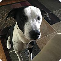 Adopt A Pet :: Raina - Bernardston, MA