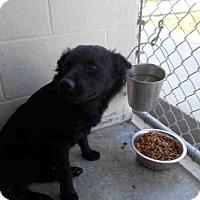 Adopt A Pet :: A010703 - Rosenberg, TX