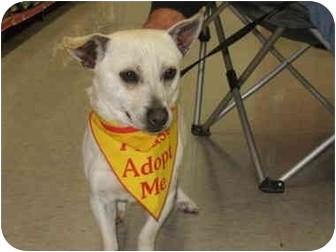 Corgi Mix Dog for adoption in Bakersfield, California - Jack