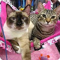 Adopt A Pet :: Thompson - Long Beach, CA