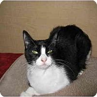 Adopt A Pet :: Roxie - Austin, TX