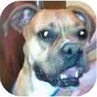 Adopt A Pet :: Charlotte - Sunderland, MA