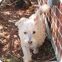 Adopt A Pet :: Spike - Greenwood, MI