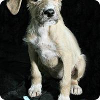 Adopt A Pet :: Doe - Lufkin, TX