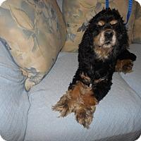 Adopt A Pet :: Blazer -Adopted! - Kannapolis, NC