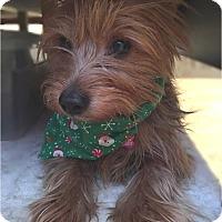 Adopt A Pet :: Gita - Salem, OR
