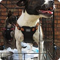 Adopt A Pet :: Sarah - Northport, AL