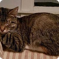 Adopt A Pet :: Tanis - Topeka, KS
