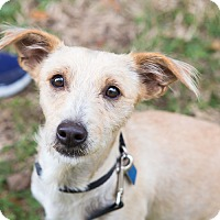 Adopt A Pet :: Lorraine - Houston, TX