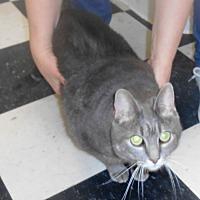 Adopt A Pet :: Lucia - Parkton, NC