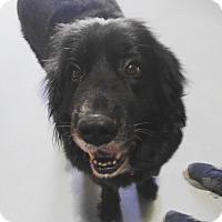 Adopt A Pet :: Kleo - Chicago, IL