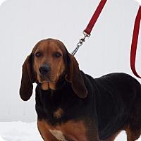 Adopt A Pet :: Gretta - Shelby, MI
