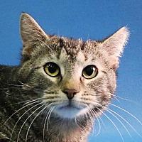 Adopt A Pet :: Ava - Overland Park, KS