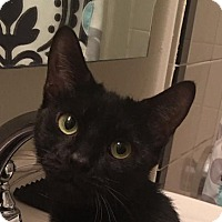 Adopt A Pet :: Macy - New York, NY