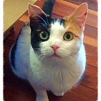 Adopt A Pet :: Penny (Guest) - Baltimore, MD