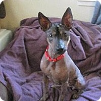 Adopt A Pet :: Skye (fostered in KS) - Gilford, NH
