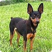 Adopt A Pet :: Miracle - McDonough, GA