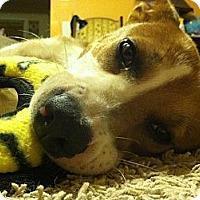 Adopt A Pet :: Frannie - Hendersonville, TN