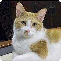 Adopt A Pet :: OLIVER - Naples, FL