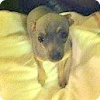 Adopt A Pet :: BeBe - Seattle, WA