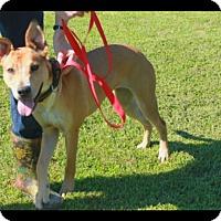 Adopt A Pet :: Nessa (being fostered in TN) - Cranston, RI