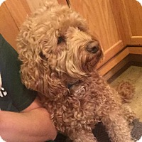 Adopt A Pet :: Bob - Grand Rapids, MI